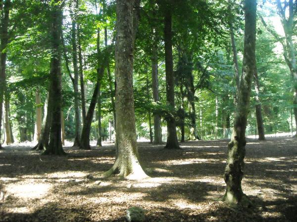 Gargano---Foresta-Umbra.jpg