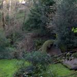 Particolare del bosco intorno alla statua del mostro marino